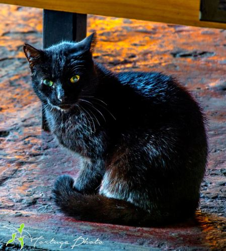 black catDSC_5899